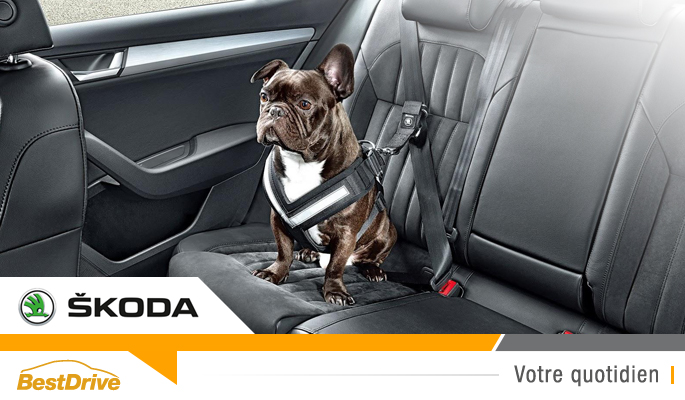 BestDrive - Nouvelle ligne d'accessoires auto Skoda sécurité chien 00